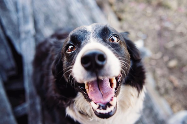 Bitten by a Dog? You Can Make a Claim Against the Owner